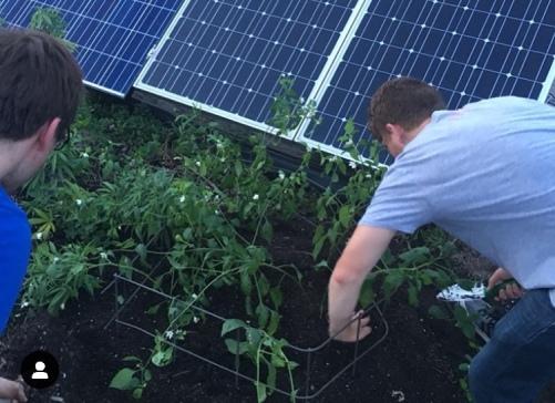 solarpanels_garden